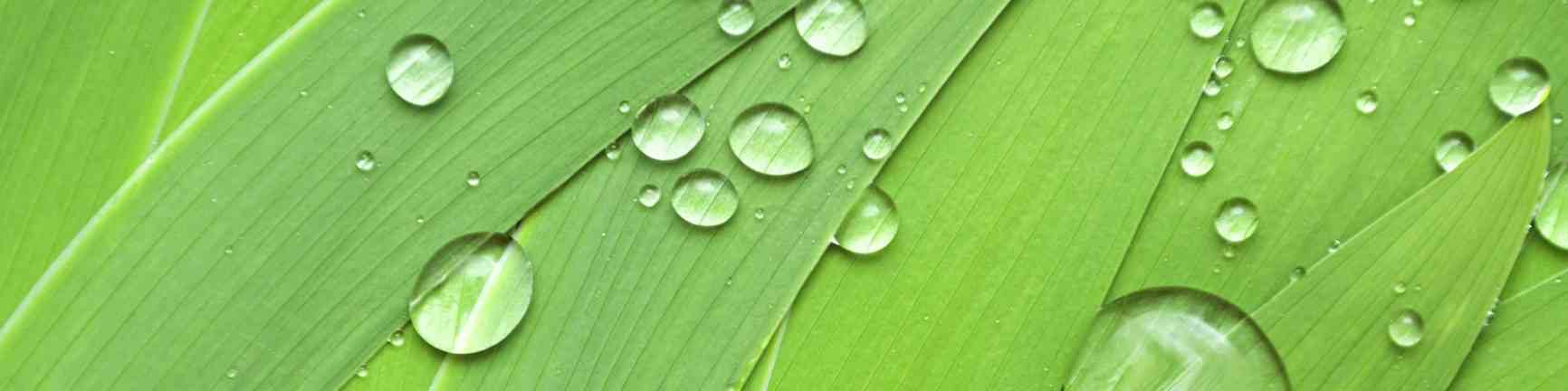 Eutonie-feuilles